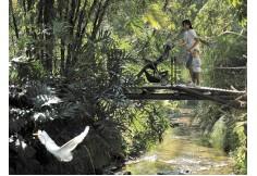 Foto Associação de Amigos do Jardim Botânico (AAJB) Rio de Janeiro Capital Rio de Janeiro
