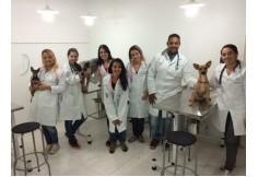 Foto CAPESVET - Centro de aprimoramento profissional e especialidades Veterinárias São Paulo Centro